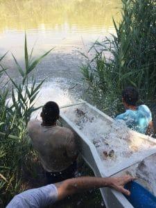 Halasítás Ponty horgásztó